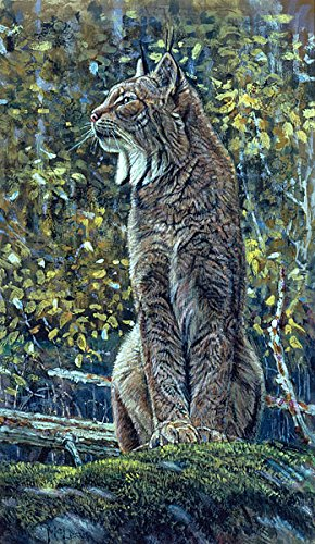 Paintings from the wild: The art and life of George McLean - David M Lank