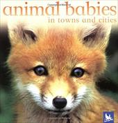 Animal Babies in Towns and Cities - Kingfisher Books